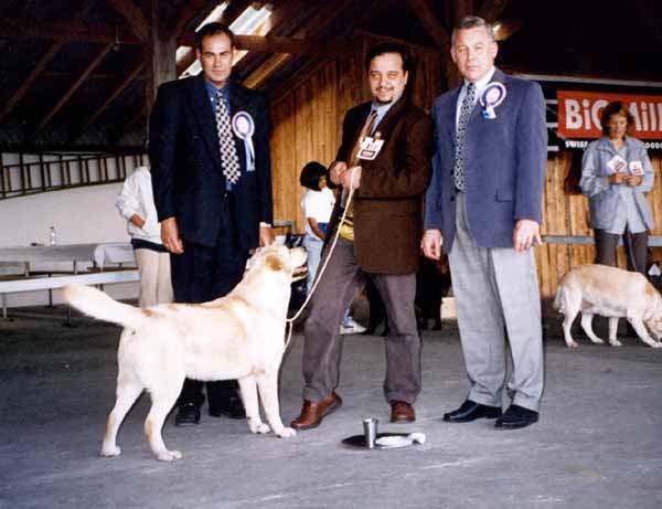 Doger best in show a montricher